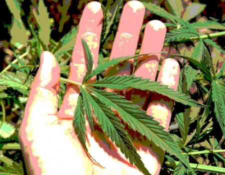 <em>Warum</em> <b>Cannabis</b> legalisieren?