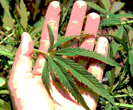 Warum Cannabis legalisieren?